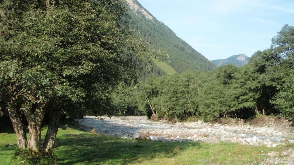 Valsertal Erlenwald