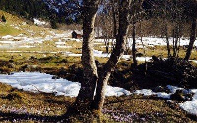 Frühlingsboten und starke Arme auf der Alm willkommen.